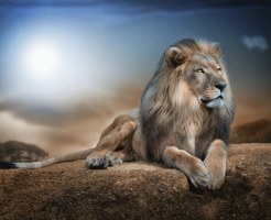 strong-lion