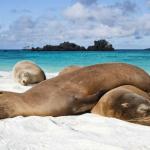 lazy-seals